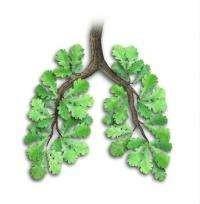 Зелёные «лёгкие» нашей Земли