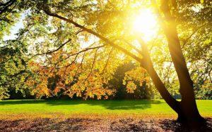 Недостаток света ухудшает память